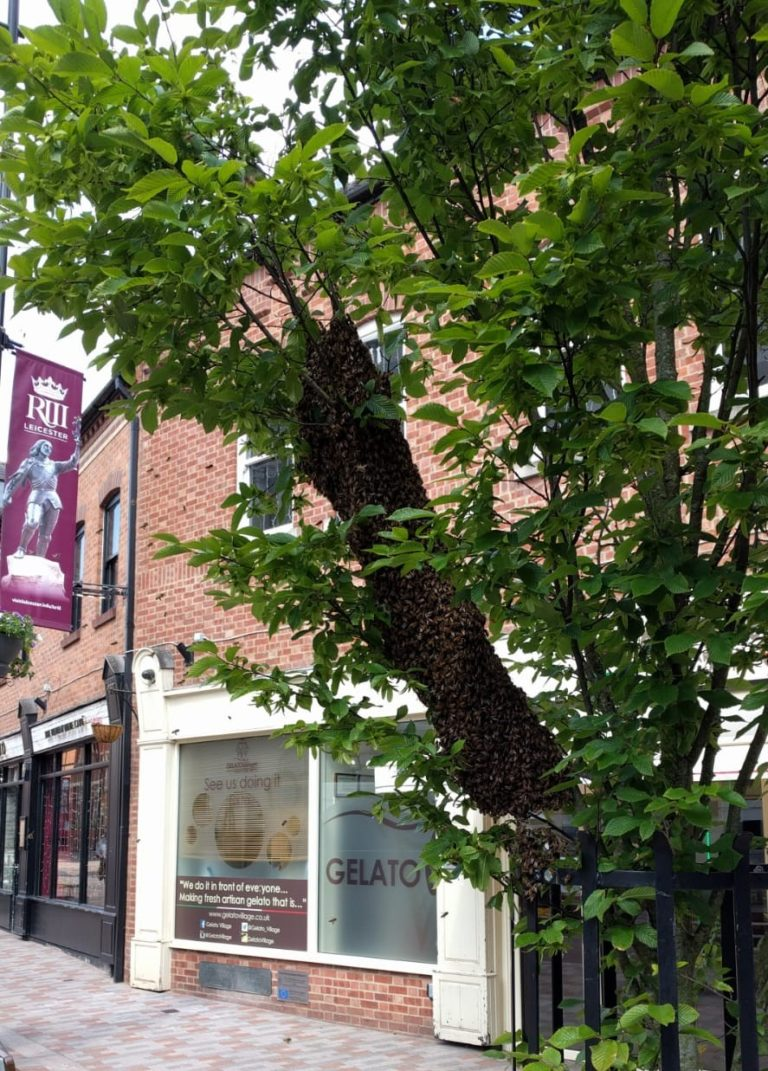 Bees swarming outside Gelato Village